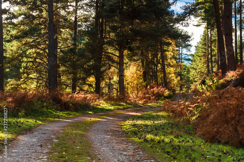 Valokuva  Dappled light on a track through a forest in Speyside, Scotland