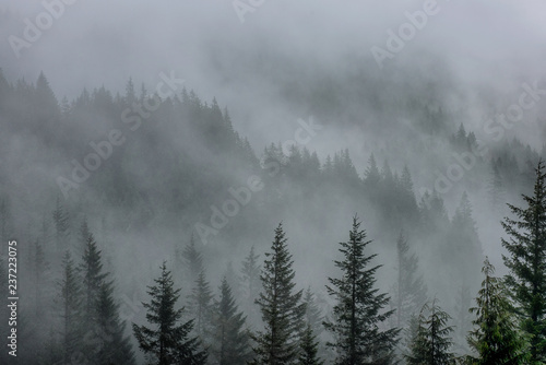 Garden Poster Forest forest in the mist