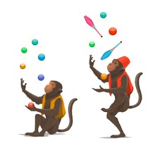 Circus Show Trained Monkeys Juggling Balls, Maces