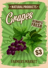 Grapes Fruit Natural Farm Product