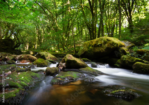Fototapety, obrazy: stream in the forest