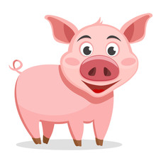The Pig Stands On A White Background.