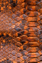 Abstract Coloured Real Snake Skin Snakeskin Animal Print Background