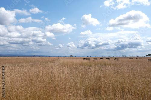 Photo Stands Night blue Herd of elephants Tanzania safari