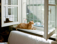 Red Cat Enjoys Sunrays While L...