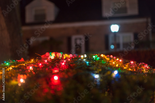 Christmas Bush Lights.Multi Colored Christmas Lights On A Bush In Front Of House