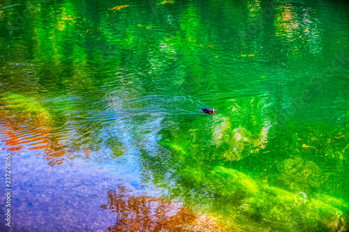 Obraz natural green colored water surface  - fototapety do salonu