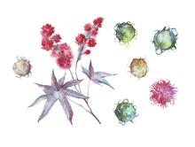 Castor Oil Plant Watercolor Illustration