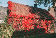 Overgrown House With Leaves