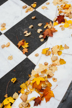 Autumn Yellow Leaves On Black And White Marble Tiles