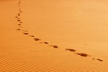 Footprints In A Sand Dune In Sahara Desert. Erg Chebbi, Merzouga, Morocco