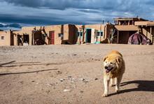 Taos Pueblo With Dog