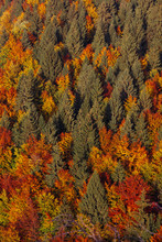 Colourful Mountain Forest At Fall