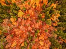 Picture Of Autumn Forest From Above.