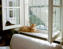 Opened Window, Sunny Light And...