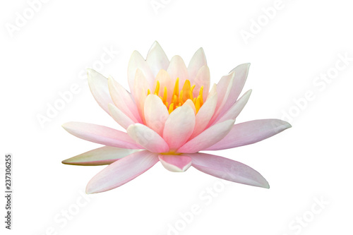 Door stickers Water lilies Beautiful pink Lotus flower isolated on white background.