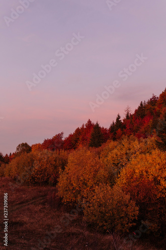 Beautiful colourful forest in the mountains Wall mural