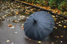Black Umbrella On Autumn Scene