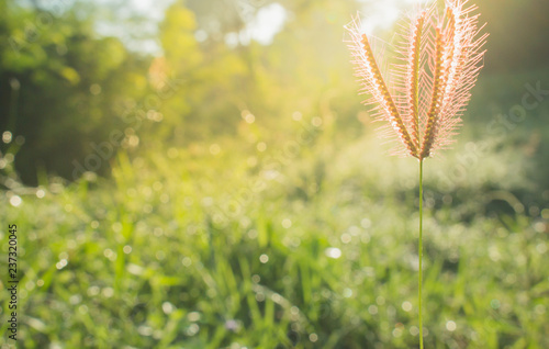 Cadres-photo bureau Jardin The grass flower close-up in morning meadow blur sunlight background, the nature background
