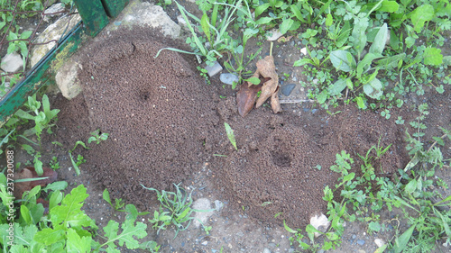 Round ant excavation mounds with centre holes