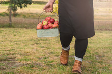 Woman Holding A Vintage Bucket Of Fresh Apples