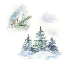 Watercolor Winter Bird Illustr...