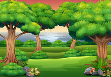 Forest Background With The Nature Scene