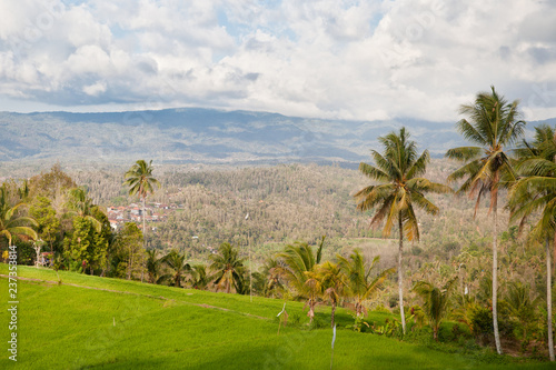 Aluminium Prints Bali Landscape with palm trees in the mountains.