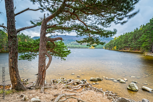 Impressions of the Rothiemurchus Forest Canvas Print