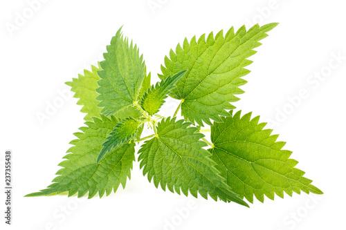 Fotografia  Nettle leaves isolated on white background