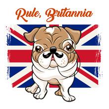 English Bulldog With Mustaches...