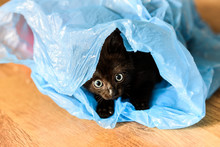 A Small Black Cat Playing In A...
