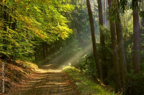 Foto op Canvas Weg in bos jesień na Mazurach