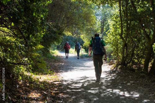 Canvas-taulu Camino de Santiago trail, Galicia, Spain