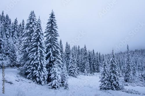 Fotobehang Lavendel Christmas holiday background