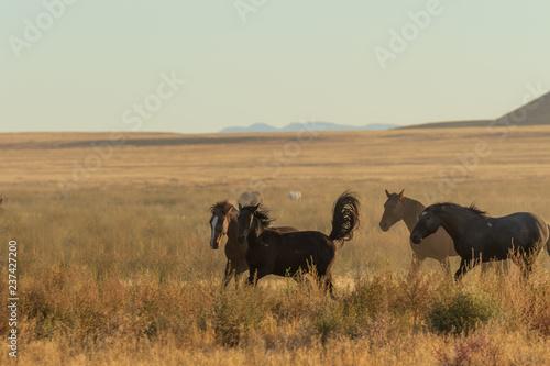 Photo  Herd of Wild Horses Running Across the Utah Desert