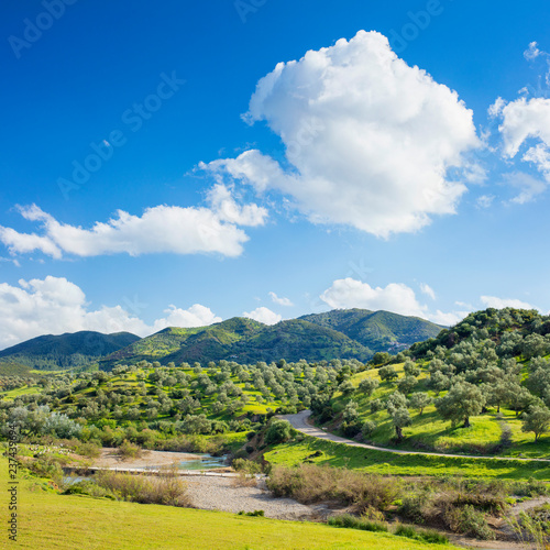 white cloud in blue sky above olive grove and green hills in Morocco