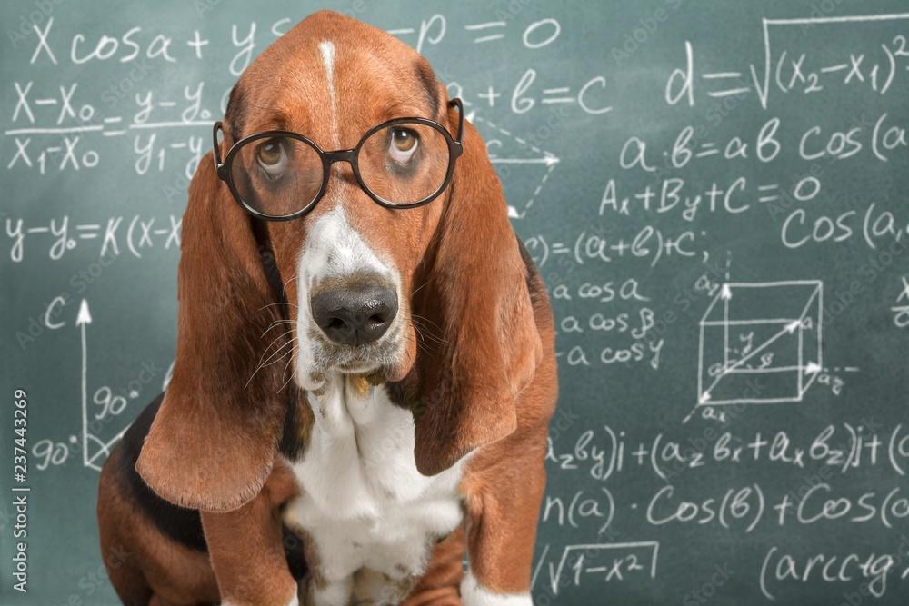 Fototapety, obrazy: Math dog crazy glasses academic animal blackboard