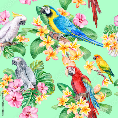 Poster Parrot Set of parrots, macaw with tropical plants. Seamless patterns, wallpaper with exotic birds. Watercolor. Illustration. Template. Handmade. Close-up. Clip art.