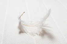 White Feather On Soft Mattress