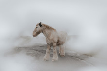 A White Horse Surrounded By Fog