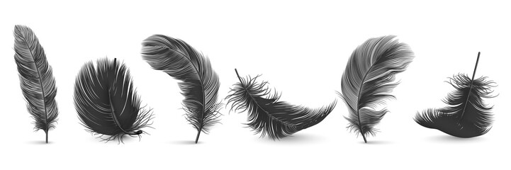 Vector 3d Realistic Different Falling Black Fluffy Twirled Feather Set Closeup Isolated on White Background. Design Template, Clipart of Angel or Bird Detailed Feather in Various Shapes
