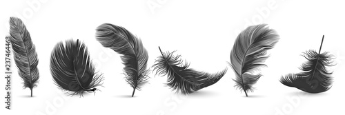 Vector 3d Realistic Different Falling Black Fluffy Twirled Feather Set Closeup Isolated on White Background Fototapet