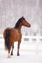 Horse In Snow With Breath