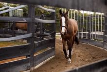 Horse In Hot Walker