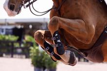 Horse Legs Going Over Jump