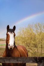 Horse At The End Of A Rainbow