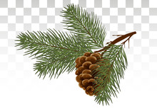 Hand Drawn Pine Cone And Fir Tree. Botanical Drawn Vector Illustration. Isolated Xmas Pinecones. For Greeting Cards, Backgrounds, Holiday Decor. Vector. Eps 10.