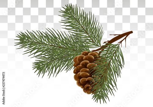 Fotografía  Hand drawn Pine cone and fir tree