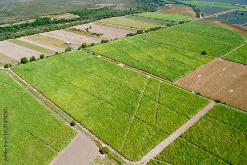 fotos aèreas camps de cultivo agricultura Wallpaper Mural